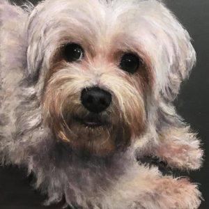 Adorable chien bichon maltais